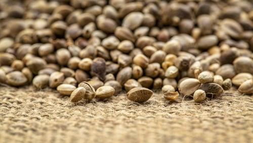 Hemp Seed CBD