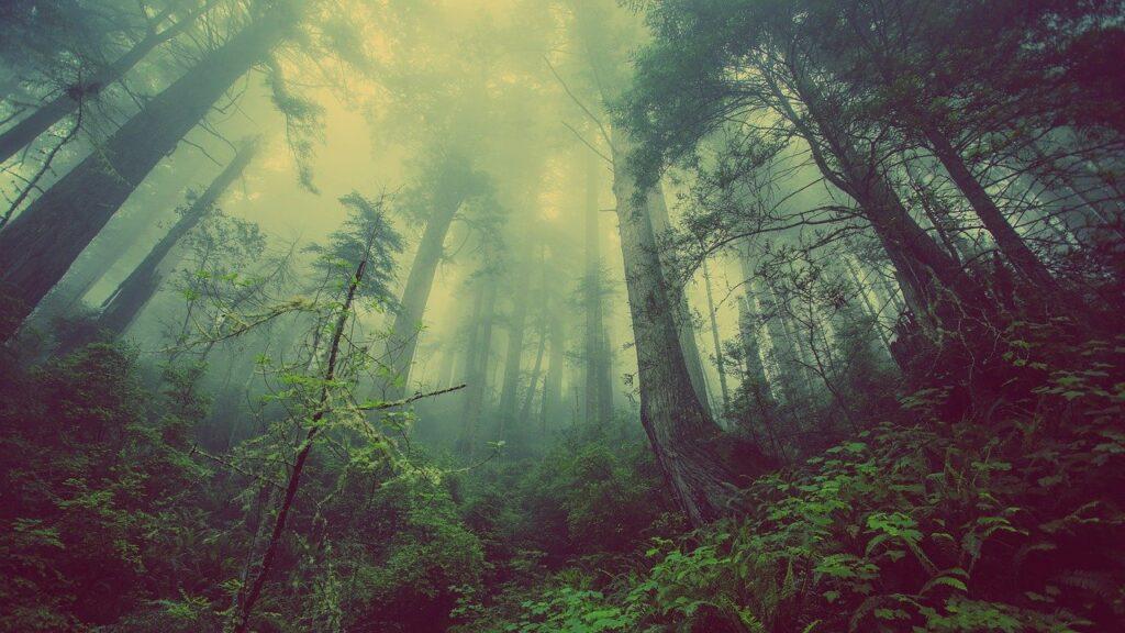 Cedar forest heals the skin