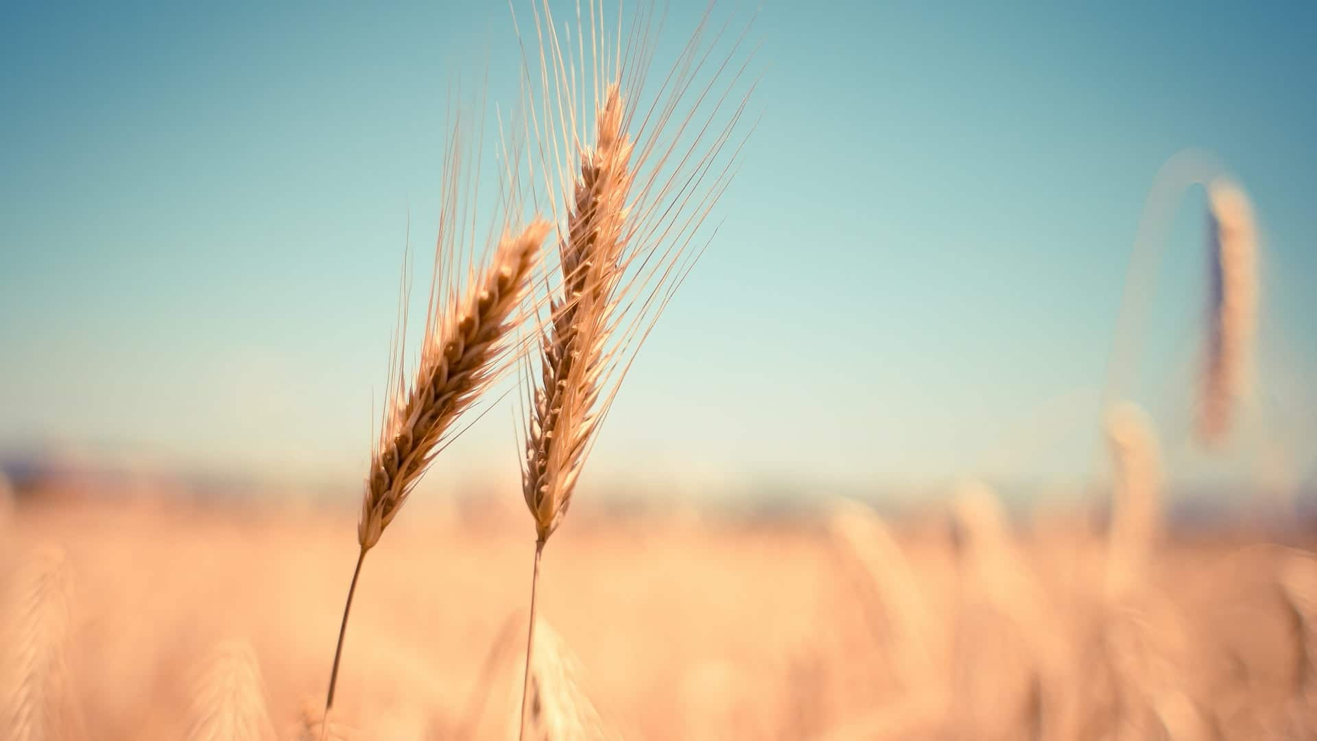 Grain Alcohol (Rectified Spirit)
