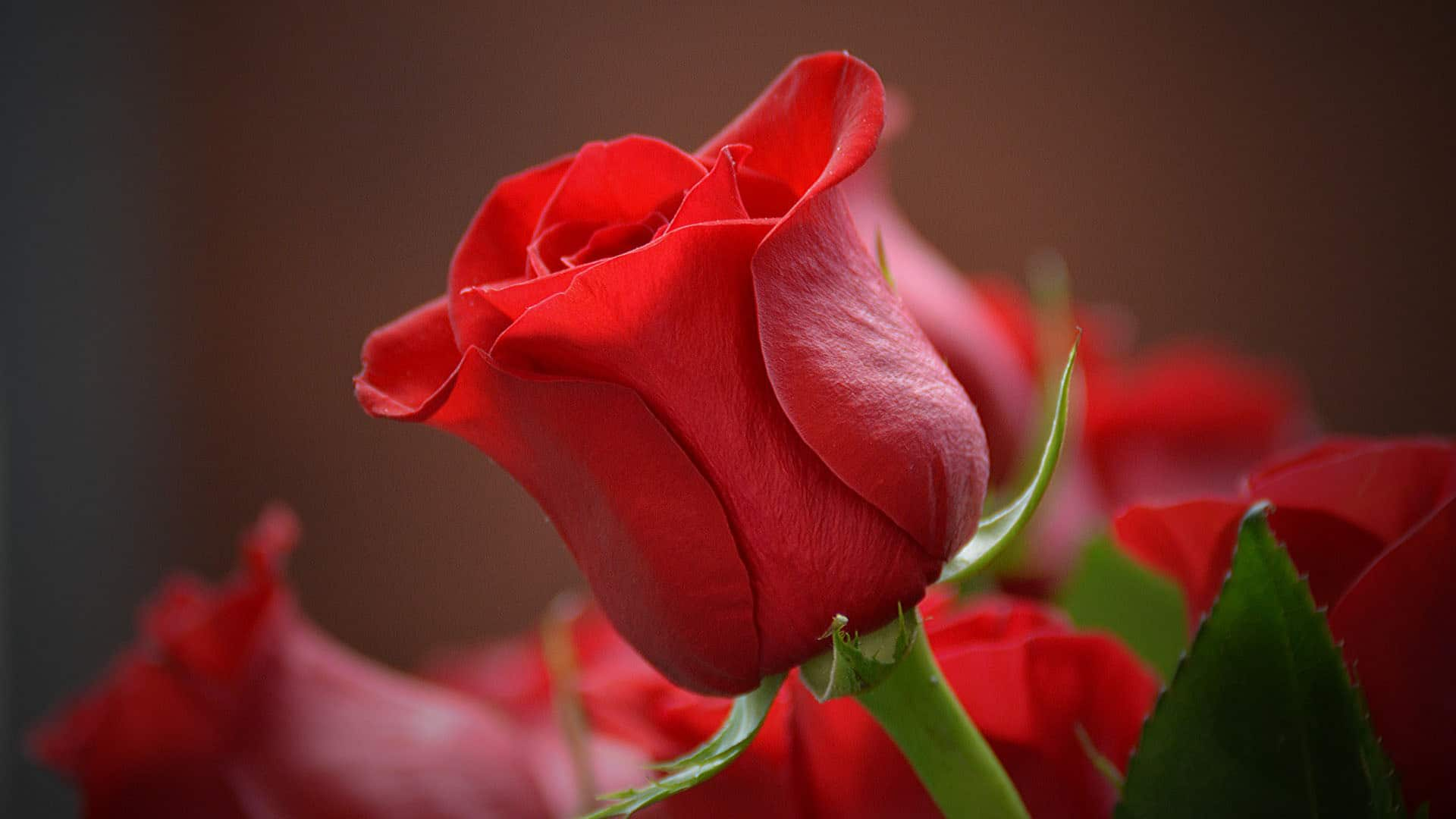 Rose Ingredient